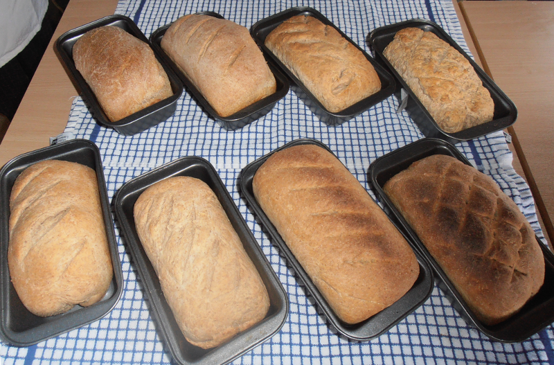Fresh baked loaves of bread